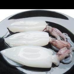 Calamares limpios 10/20